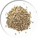 Konopné semená