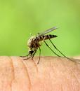 Uštipnutie hmyzom